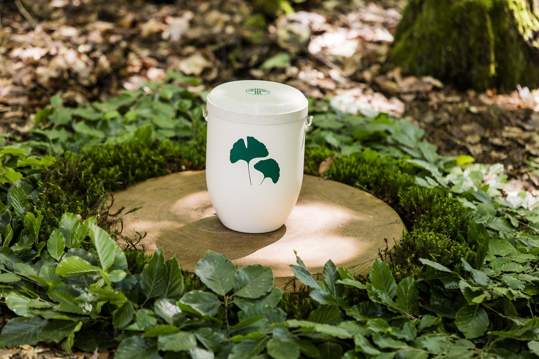 Maruschke friedwald-urne_01_k Home